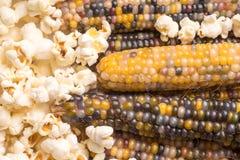 ξηρό πολύχρωμο καλαμπόκι στο σπάδικα έτοιμο να σκάσει popcorn ή να κάνει το τρίξιμο με ήδη σκαμένο popcorn στοκ φωτογραφία