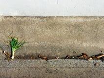Ξηρό πράσινο κρεμμύδι στο βρώμικο τσιμέντο Στοκ Εικόνες