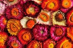 Ξηρό πρότυπο λουλουδιών Στοκ Εικόνες