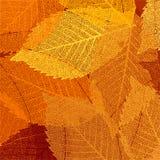 Ξηρό πρότυπο φύλλων φθινοπώρου. EPS 8 ελεύθερη απεικόνιση δικαιώματος