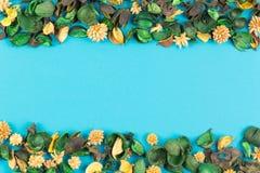 Ξηρό πλαίσιο συνόρων λουλουδιών και εγκαταστάσεων στο μπλε υπόβαθρο Η τοπ άποψη, επίπεδη βάζει Στοκ φωτογραφία με δικαίωμα ελεύθερης χρήσης