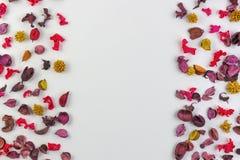 Ξηρό πλαίσιο συνόρων λουλουδιών, πετάλων και εγκαταστάσεων στο άσπρο υπόβαθρο Η τοπ άποψη, επίπεδη βάζει Στοκ Φωτογραφίες