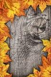 Ξηρό σκηνικό συνόρων φύλλων σφενδάμου στο παλαιό δεμένο ξύλινο υπόβαθρο Στοκ Εικόνες