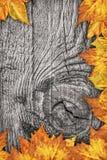 Ξηρό σκηνικό συνόρων φύλλων σφενδάμου στο παλαιό δεμένο ξύλινο υπόβαθρο Στοκ Φωτογραφίες