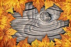 Ξηρό σκηνικό συνόρων φύλλων σφενδάμου στο παλαιό δεμένο ξύλινο υπόβαθρο Στοκ εικόνα με δικαίωμα ελεύθερης χρήσης