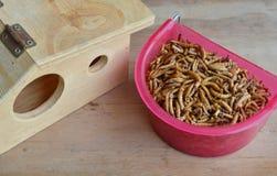 Ξηρό σκουλήκι για τη σίτιση του τρωκτικού ή του πουλιού με τη σαύρα και το ξύλινο σπίτι Στοκ φωτογραφίες με δικαίωμα ελεύθερης χρήσης
