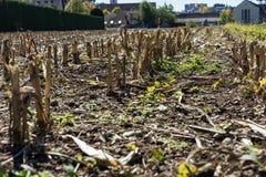 Ξηρό τέλος τομέων γεωργίας του καλοκαιριού πάρα πολύ καυτό καμία βροχή Στοκ εικόνα με δικαίωμα ελεύθερης χρήσης
