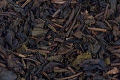 ξηρό τσάι φύλλων Στοκ Εικόνες