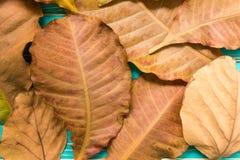 Ξηρό υπόβαθρο φύλλων/ξηρά φύλλα/ξηρά φύλλα στο εκλεκτής ποιότητας ξύλινο υπόβαθρο Στοκ φωτογραφία με δικαίωμα ελεύθερης χρήσης