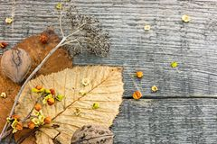 Ξηρό φυτό με τα καρύδια, τα πεσμένα κίτρινα και καφετιά φύλλα στο ξύλινο BO Στοκ φωτογραφία με δικαίωμα ελεύθερης χρήσης