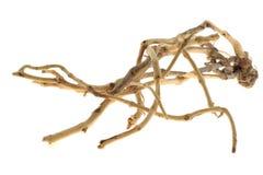 ξηρό φυτό στοιχείων Στοκ φωτογραφίες με δικαίωμα ελεύθερης χρήσης
