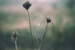 ξηρό φυτό φθινοπώρου Στοκ Φωτογραφία