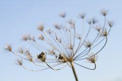 ξηρό φυτό φθινοπώρου Στοκ φωτογραφίες με δικαίωμα ελεύθερης χρήσης
