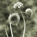 ξηρό φυτό Στοκ φωτογραφίες με δικαίωμα ελεύθερης χρήσης