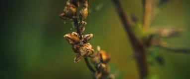 ξηρό φυτό Στοκ εικόνα με δικαίωμα ελεύθερης χρήσης