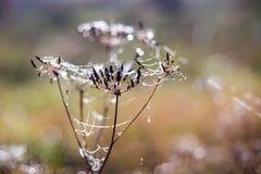 ξηρό φυτό Στοκ φωτογραφία με δικαίωμα ελεύθερης χρήσης