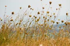 ξηρό φυτό Στοκ Φωτογραφίες