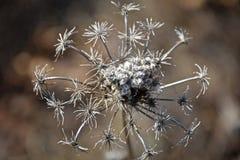 ξηρό φυτό Στοκ εικόνες με δικαίωμα ελεύθερης χρήσης