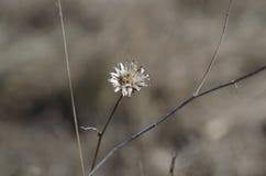 ξηρό φυτό Στοκ Φωτογραφία