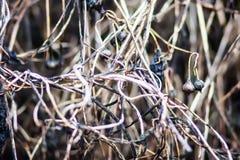 ξηρό φυτό Στοκ Εικόνα