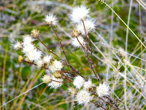 ξηρό φυτό Στοκ Εικόνες