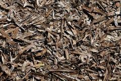 ξηρό φύκι Στοκ Φωτογραφία