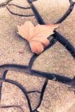 ξηρό φύλλο στο ξηρό έδαφος - τονισμένη εικόνα Στοκ Φωτογραφία