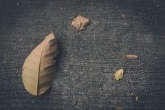 Ξηρό φύλλο στο τσιμεντένιο πάτωμα στοκ εικόνα με δικαίωμα ελεύθερης χρήσης