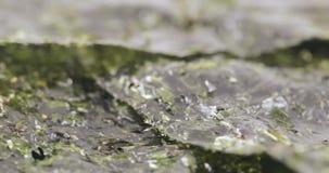 Ξηρό φύλλο του λάχανου θάλασσας απόθεμα βίντεο