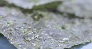 Ξηρό φύλλο του λάχανου θάλασσας φιλμ μικρού μήκους