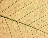 ξηρό φύλλο στοκ εικόνες