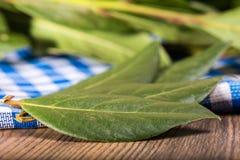 ξηρό φύλλο κόλπων Στοκ φωτογραφία με δικαίωμα ελεύθερης χρήσης