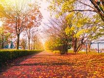 Ξηρό φύλλο πεσμένος και ηλιοφάνεια στη μακριά οδό περπατήματος στο πάρκο στο α Στοκ φωτογραφία με δικαίωμα ελεύθερης χρήσης