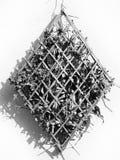 Ξηρό φύλλο στο ξύλινο πλαίσιο Στοκ φωτογραφίες με δικαίωμα ελεύθερης χρήσης