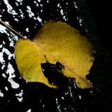 Ξηρό φύλλο Στοκ Φωτογραφία