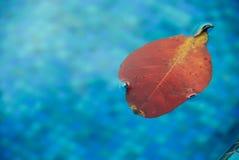 ξηρό φύλλο Στοκ φωτογραφία με δικαίωμα ελεύθερης χρήσης
