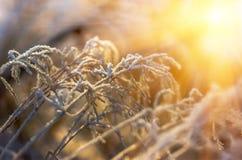 Ξηρό χειμερινό πρωί χλόης Στοκ Εικόνες