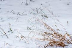 Ξηρό χειμερινό πρωί χλόης Στοκ φωτογραφία με δικαίωμα ελεύθερης χρήσης
