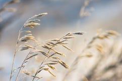 Ξηρό χειμερινό πρωί χλόης Στοκ εικόνες με δικαίωμα ελεύθερης χρήσης