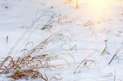 Ξηρό χειμερινό πρωί χλόης Στοκ Εικόνα