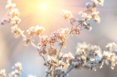 Ξηρό χειμερινό πρωί χλόης Στοκ εικόνα με δικαίωμα ελεύθερης χρήσης