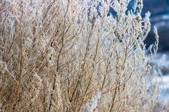 Ξηρό χειμερινό πρωί χλόης Στοκ Φωτογραφία