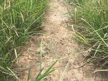 ξηρό χώμα και πράσινη χλόη Στοκ Φωτογραφίες