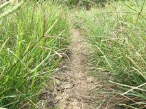 ξηρό χώμα και πράσινη χλόη Στοκ Εικόνα