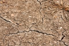 Ξηρό χώμα της στεγνωμένης δεξαμενής με έναν Μπους του φυκιού και των ρωγμών στοκ εικόνες