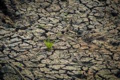 ξηρό χώμα στοκ φωτογραφίες με δικαίωμα ελεύθερης χρήσης