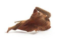 Ξηρό anthurium Στοκ Φωτογραφία