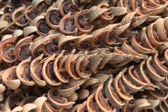 Ξηρό Areca καρύδι ή betel - καρύδι Στοκ φωτογραφίες με δικαίωμα ελεύθερης χρήσης