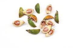 Ξηρό betel - καρύδι ή areca καρύδι που απομονώνεται στο άσπρο υπόβαθρο στοκ εικόνες με δικαίωμα ελεύθερης χρήσης
