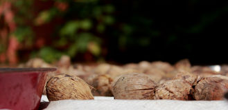 Ξηρό betel - καρύδια ή Areca καρύδια Στοκ Φωτογραφίες